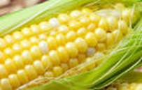 http://www.foodrecallmonitor.com/files/2014/03/Corn1.jpg